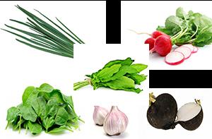 шпинат, щавель, редис, редька, чеснок, лук зеленый