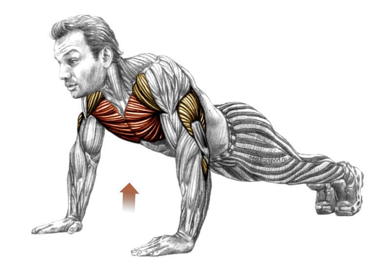 Отжимания какие мышцы работают