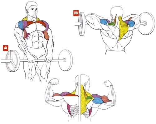 Тяга штанги к подбородку, какие мышцы работают